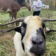 Casper the Friendly Goat.