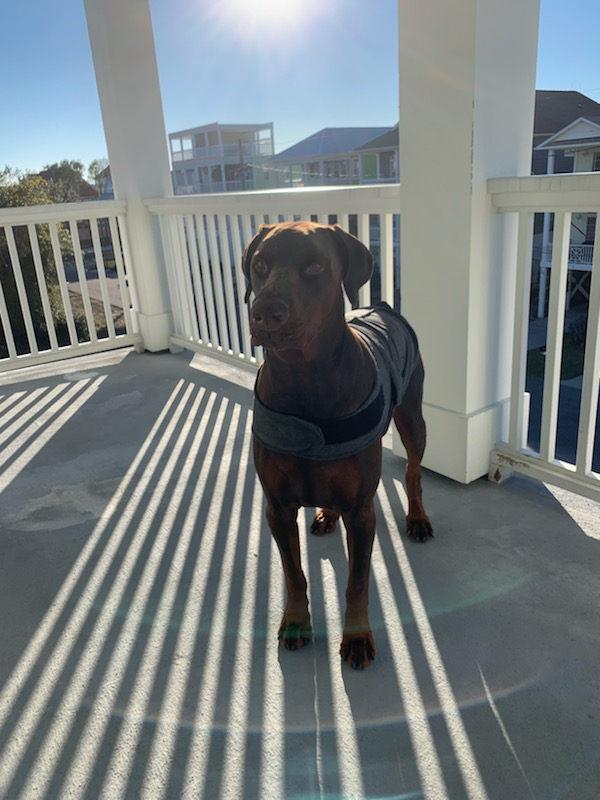 DogSittingOfWilmington.com