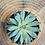 Thumbnail: Echeveria 'macdougalii' 3 inch