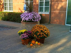 fall mums in planter commerical property straw pumpkins