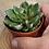 Thumbnail: Echeveria 'setorum victor' 3 inch