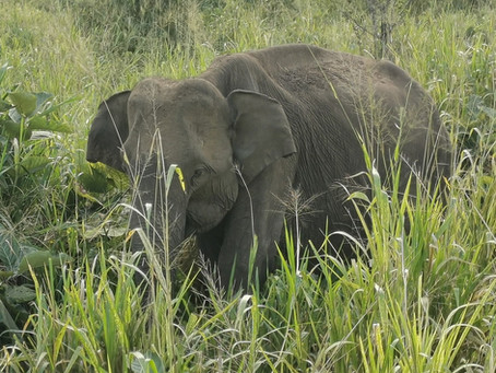Sri Lanka - a golden memory from January: Part 1 - A cooking lesson and an elephant safari
