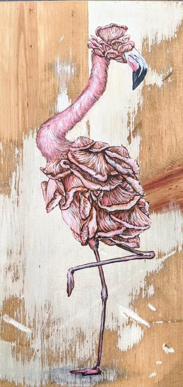 🔴 Flamigo Mushroom - Sold
