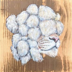 🔴 Lion's Mane - Sold