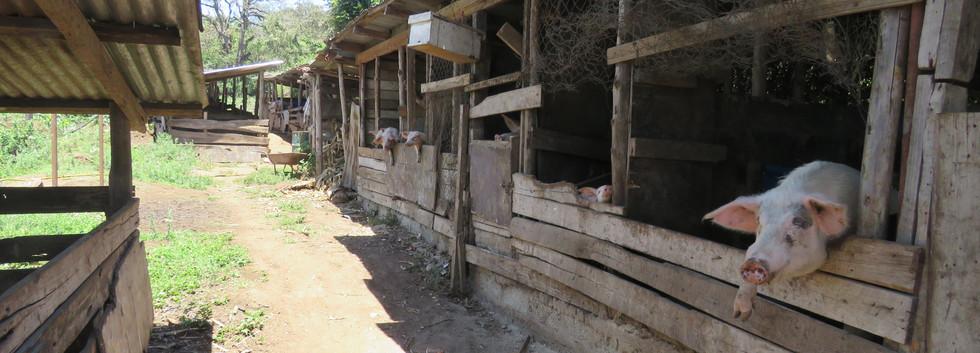 Raising Farm Animals