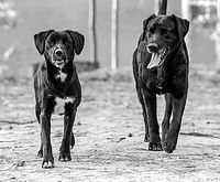 Two dogs.jpg