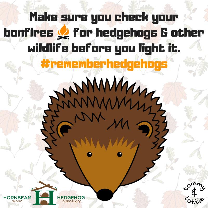Tommy & Lottie Bonfire Night Hedgehog Awareness