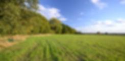 field-and-sky.jpg