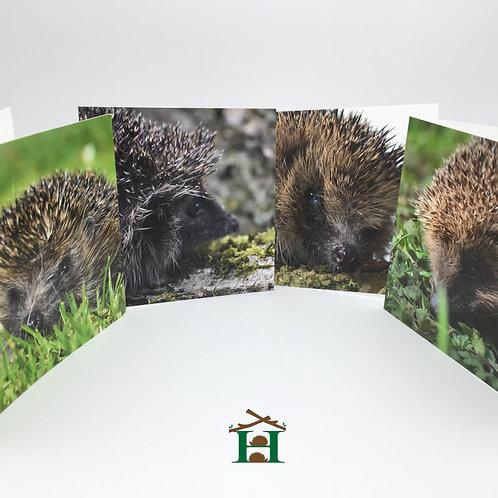 Hedgehog Gift Cards - Set of 8
