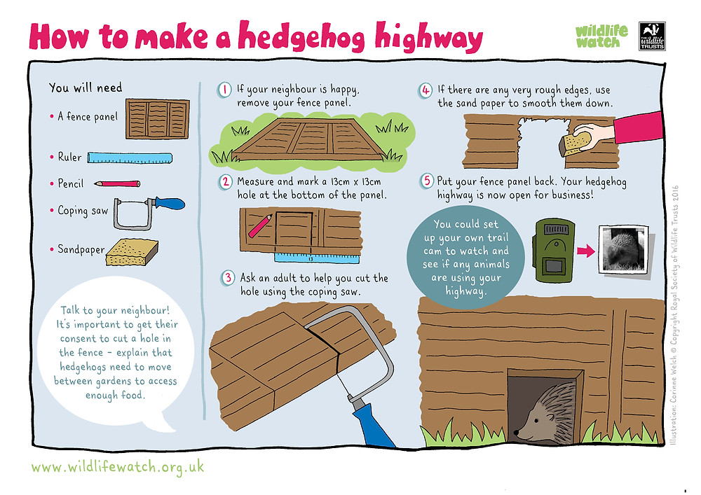 How to make a hedgehog highway