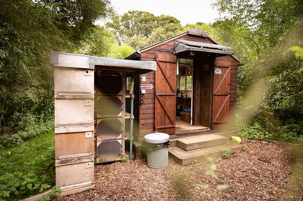 """Hogspital"" saves hedgehogs at Hornbeam Wood Hedgehog Sanctuary"