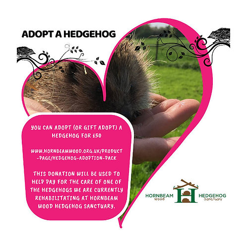 Hedgehog Adoption Gift Pack