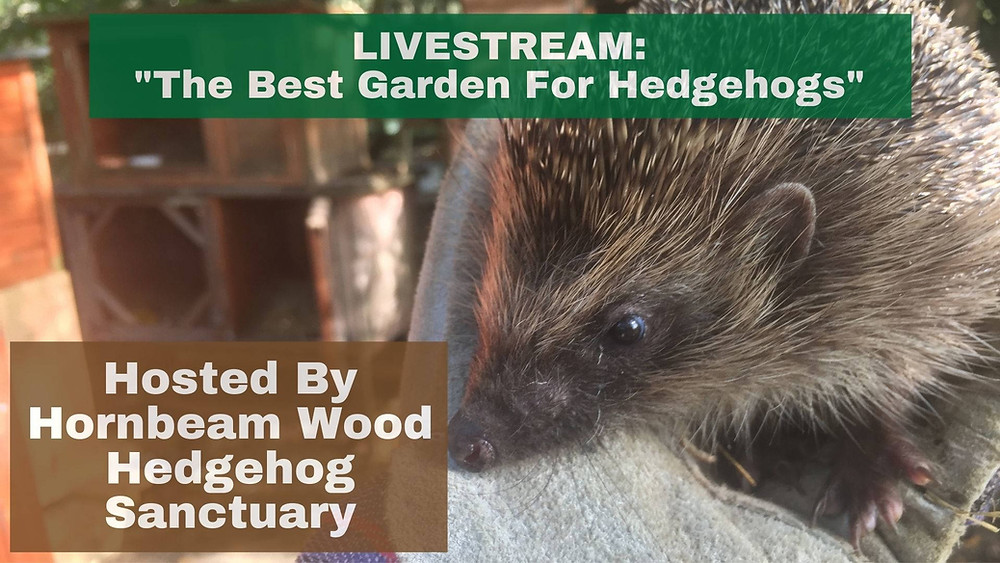 LIVESTREAM: The Best Garden For Hedgehogs [2nd May 2021 2pm-2:45pm] Facebook Live Event