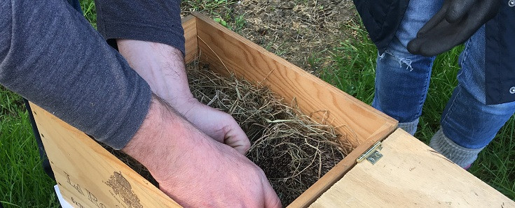 Home made hedgehog box