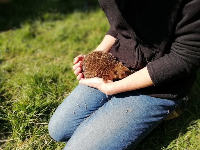 Emma with a hedgehog