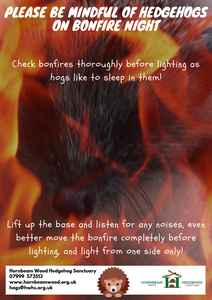 Hedgehog Bonfire Night Poster