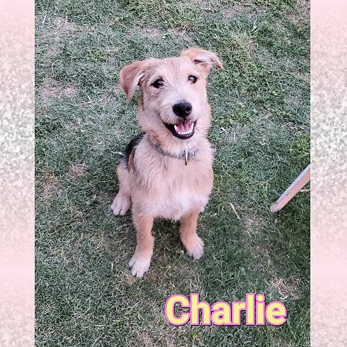 Charlie/Casper