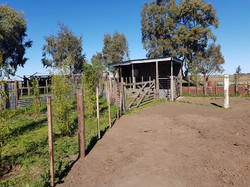 campo 11