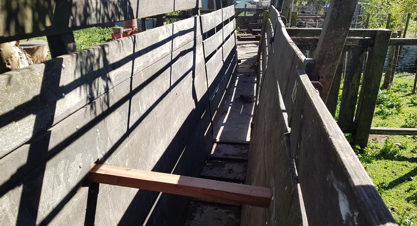 manga con piso de cemento 1