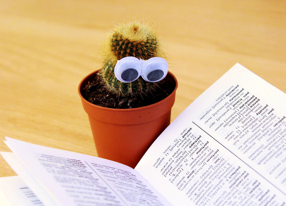 "A humorous picture of a cactus ""reading"" a dictionary"