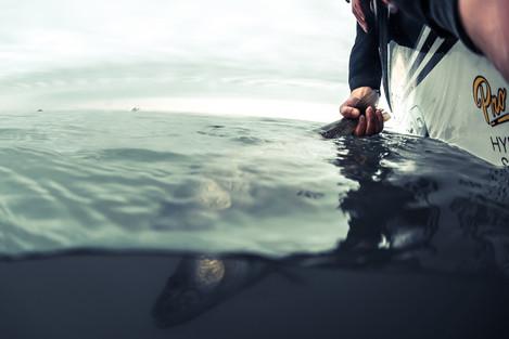 fishing website A-2.jpg