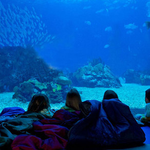 Oceanário de Lisboa: mergulhe de cabeça nesta atração!