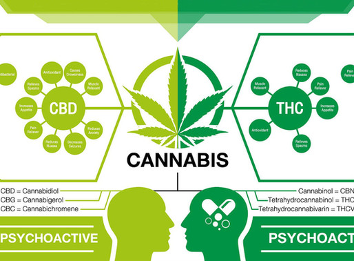 """""""What is the difference between THC, CBD, & Other Cannabinoids?"""""""
