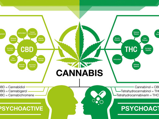 """What is the difference between THC, CBD, & Other Cannabinoids?"""