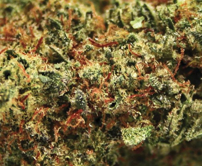 Spinach Blueberry Closeup