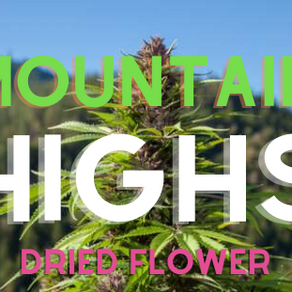 Mountain Highs: Top 5 Dried Flower