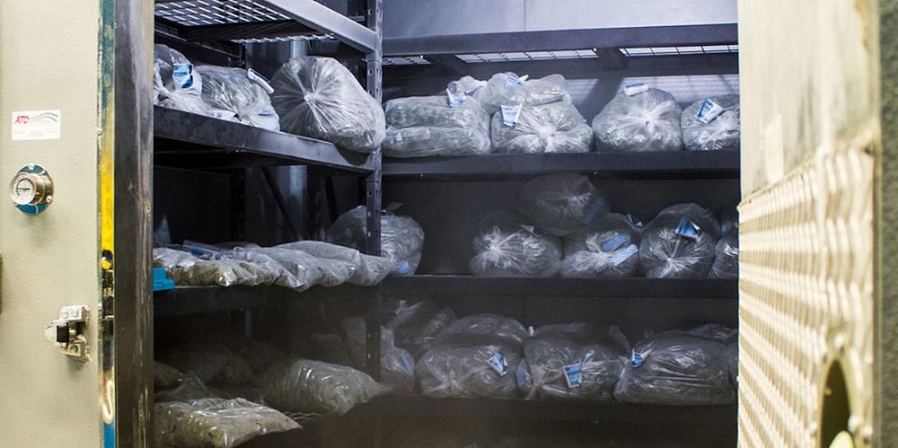Cannabis Vault