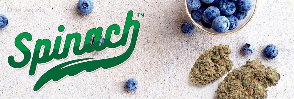 Spinach Blueberry Cannabis