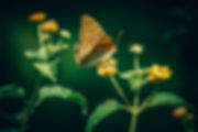 Garden Designer Butterfly