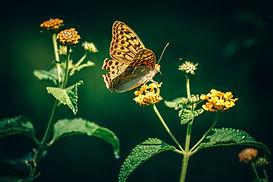 Fjäril på en blomma visar piaffe horse jewelrys miljöarbete