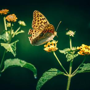 向大自然學習 - 與蝴蝶對話