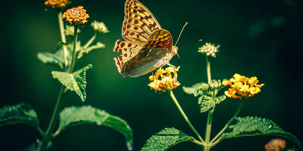 ①『虫から学べ!生き方の多様性』 ②『虫が支える人間社会』
