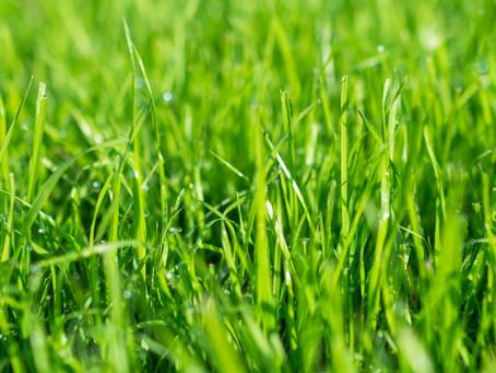 Trawnik z rolki czy z siany?