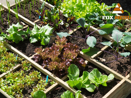 Ogród warzywny w skrzyniach - to proste!