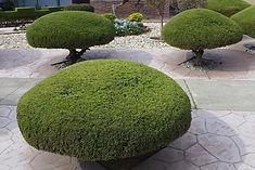 trees-92222_960_720.jpg