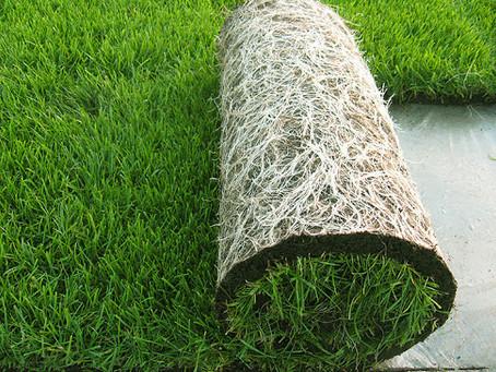 Trawnik z rolki - Trawa produkowana metodą na folii lub odcinana od gruntu.
