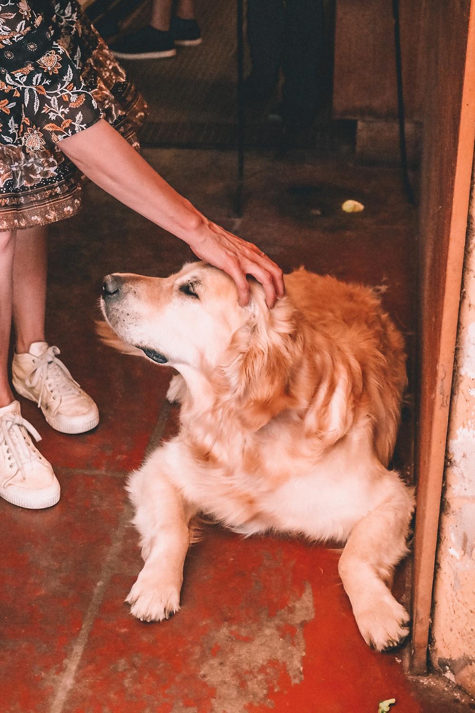 A woman patting a winery dog
