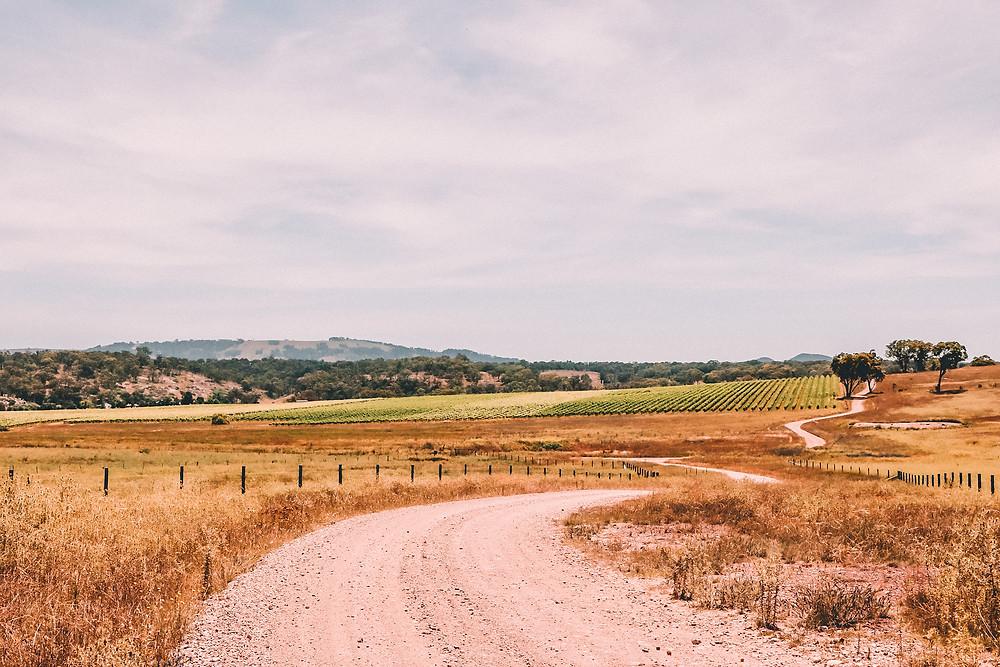 Australian wine region with vines