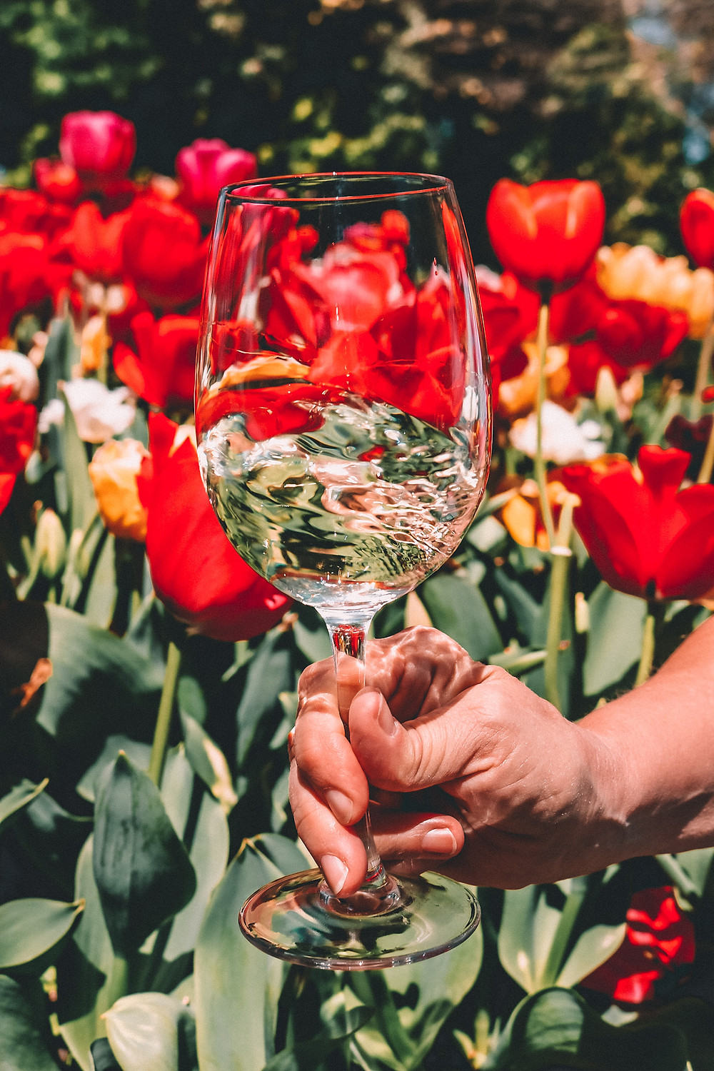 White wine swirling in spring