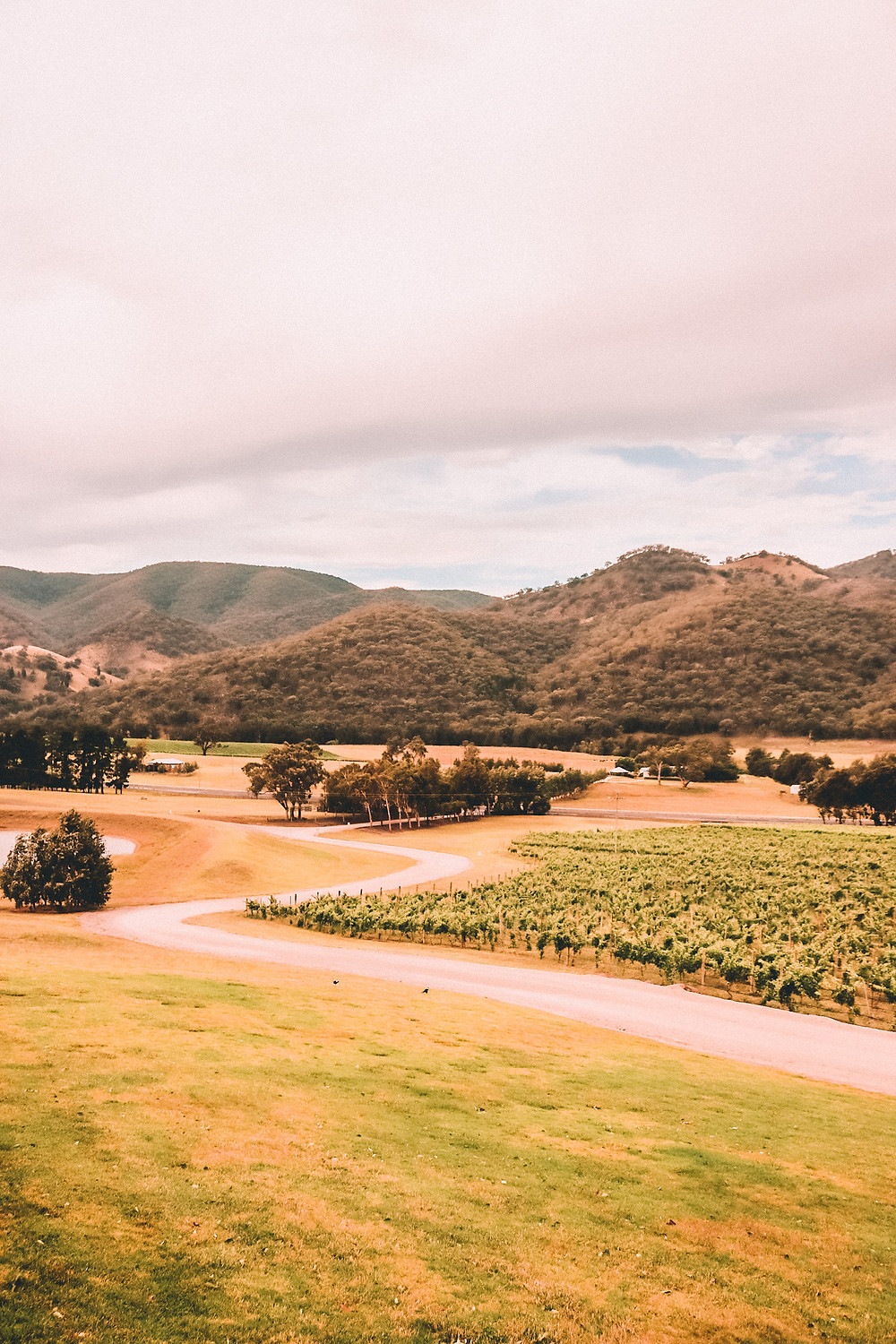 View out over winery and vines