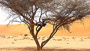 max_calderan_tree_nap