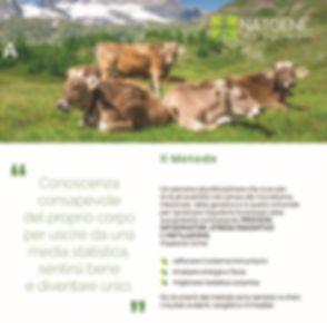 Natgene Innsbruck2 DX.jpg