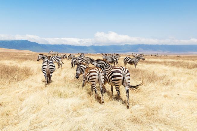 Национальный парк Ngorongoro
