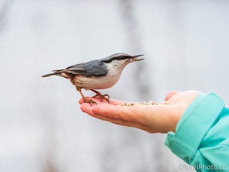 Птицы январь 2020