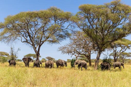 Национальный парк Tarangire