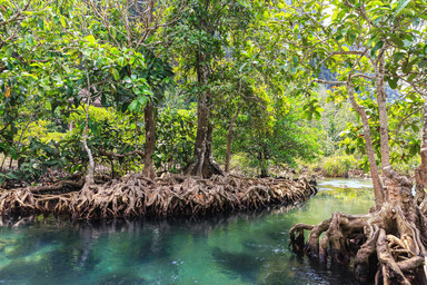 Мангровый лес